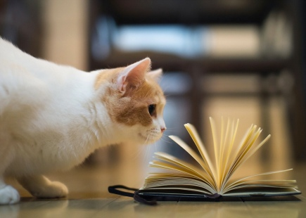 cat-reading-book-crop